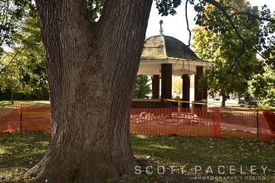 Legacy Trees Leal Park Oaks