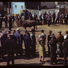 J.W. Durno selling bulls.  North Battleford.  05/22/1945