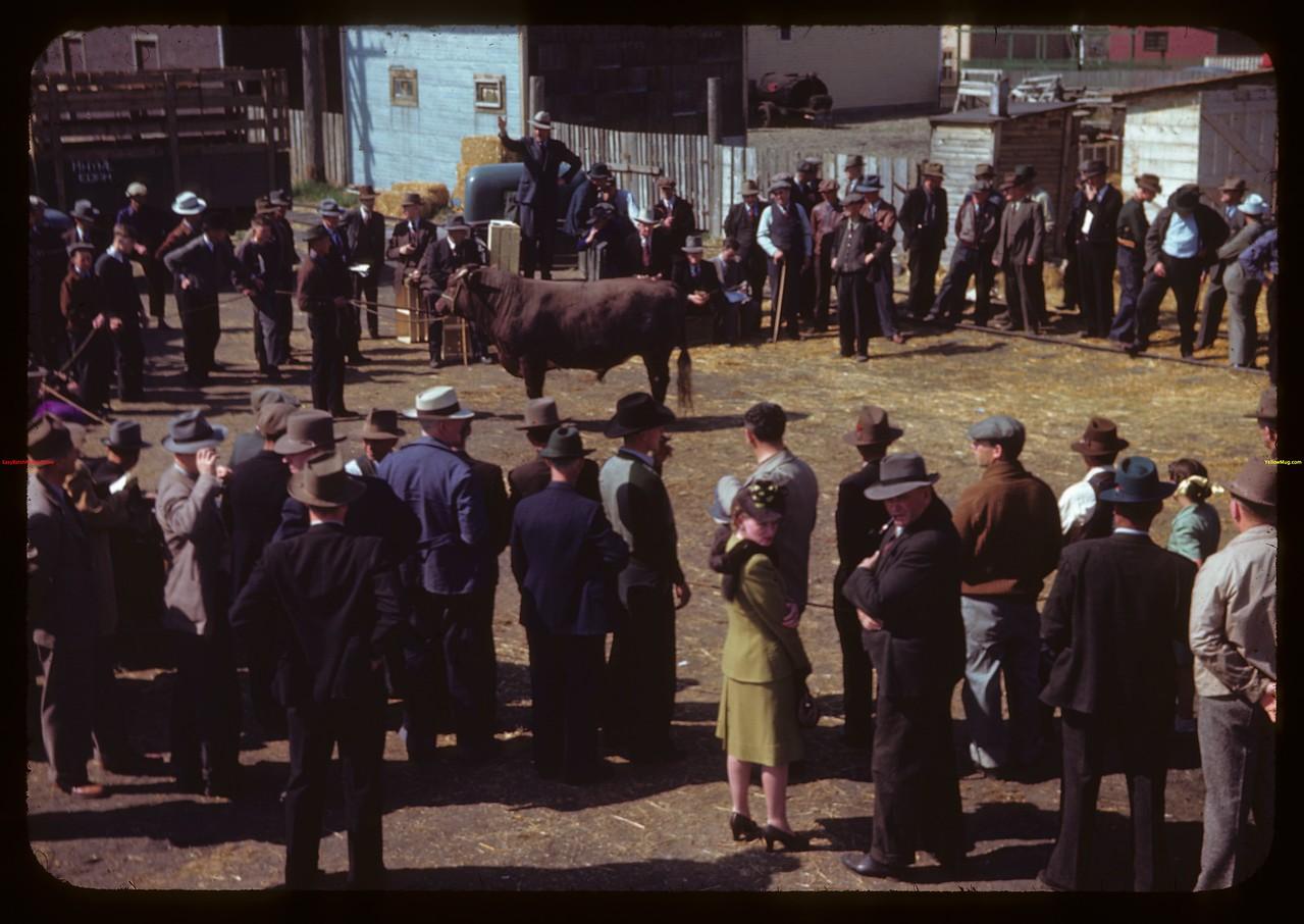 J.W. Durno selling bulls.  North Battleford.  05/22/1945