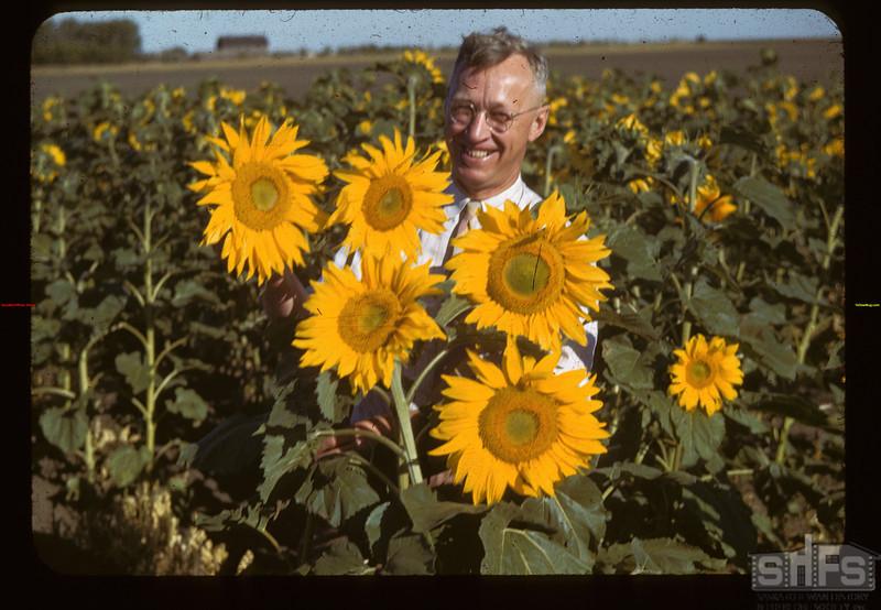 100 across Sunflowers-T.G. Jackson's Indian Head 08/21/1943