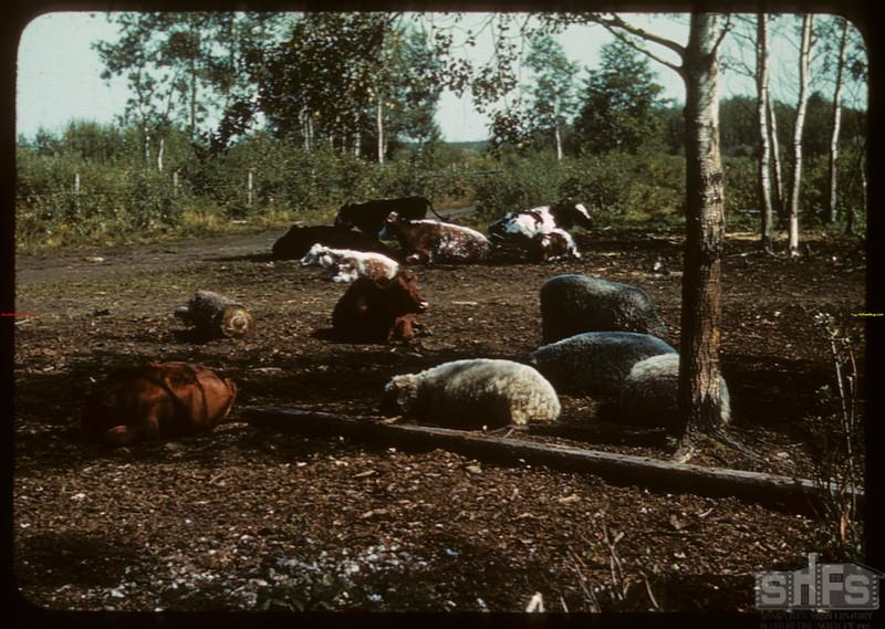 "Pasture between Ranger and Junor ""Peace""..  Ranger.  08/24/1940"
