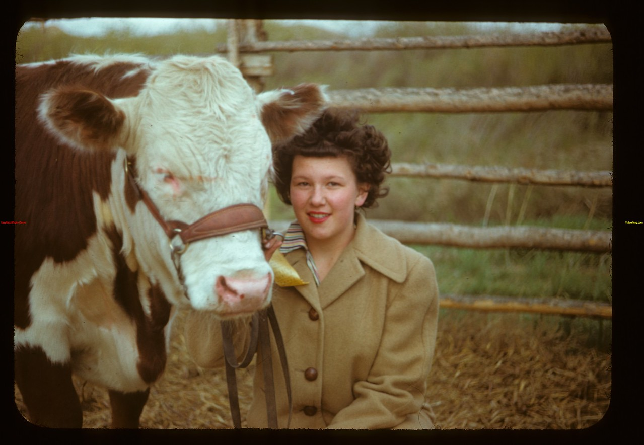 Shirley Taylor and calf - Eastend Show & Sale Eastend 05/31/1949