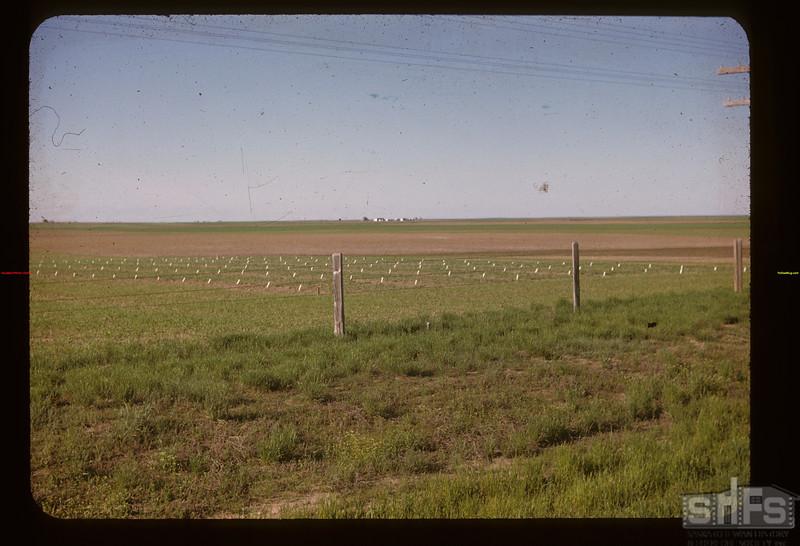Grain test near Gravelbourg Gravelbourg 06/11/1947