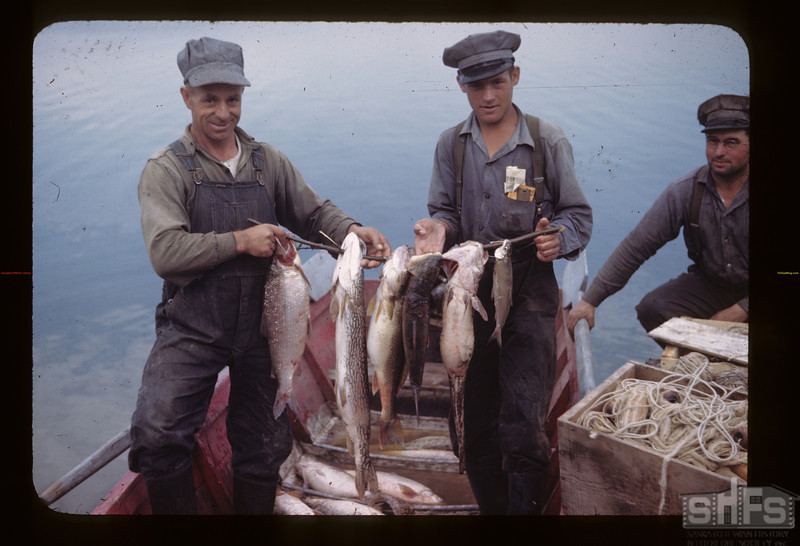 Northern lake fish - Island Lake - fish in order - Whitefish - Jackfish - pickerel - sucker - maria and tulibee. Goodsoil.  08/18/1945