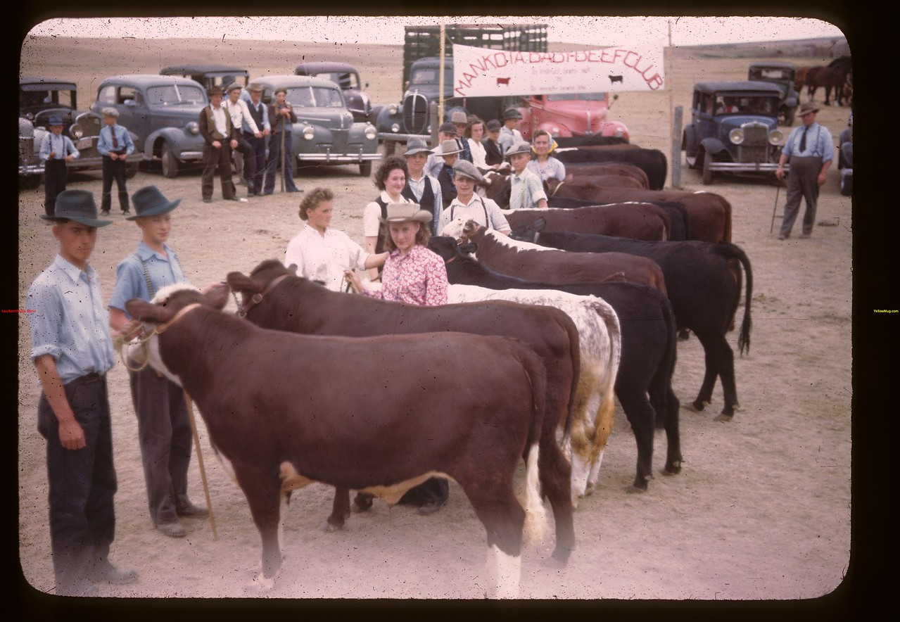 The line-up Baby Beef Show. 1st prize Edwin (Freddie) Ellis - 2nd Neil Gillespie - 3rd Donna Smith & 4th Nora Way Mankota 06/05/1946