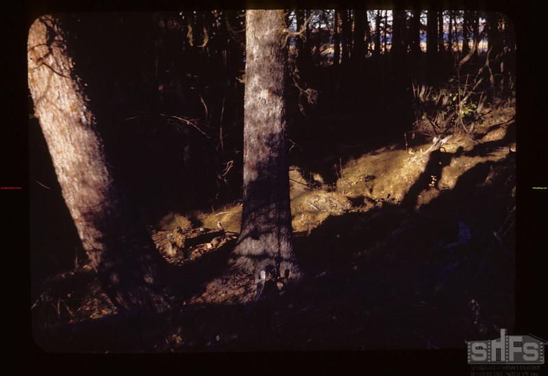 Upper Makwa. East S. W. Spruce. Toward Lake Loon Lake 10/09/1944