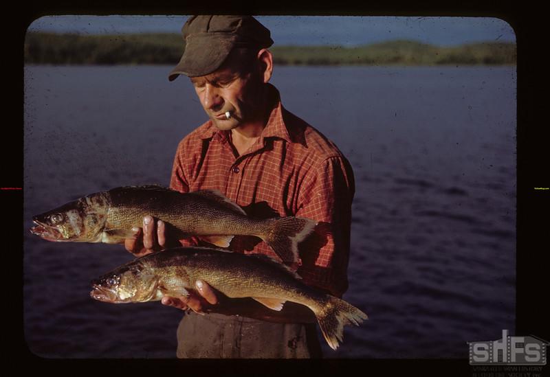 Two nice pickerel. Andy Kulyk fisherman Loon Lake 08/22/1944