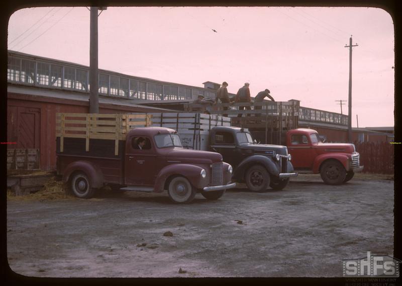 Trucks unloading Livestock Pool stock yards - west side.  Regina.  10/22/1946