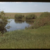 Willows brighten Saskatchewan prairies - south of Biggar.	 Biggar	 06/03/1948
