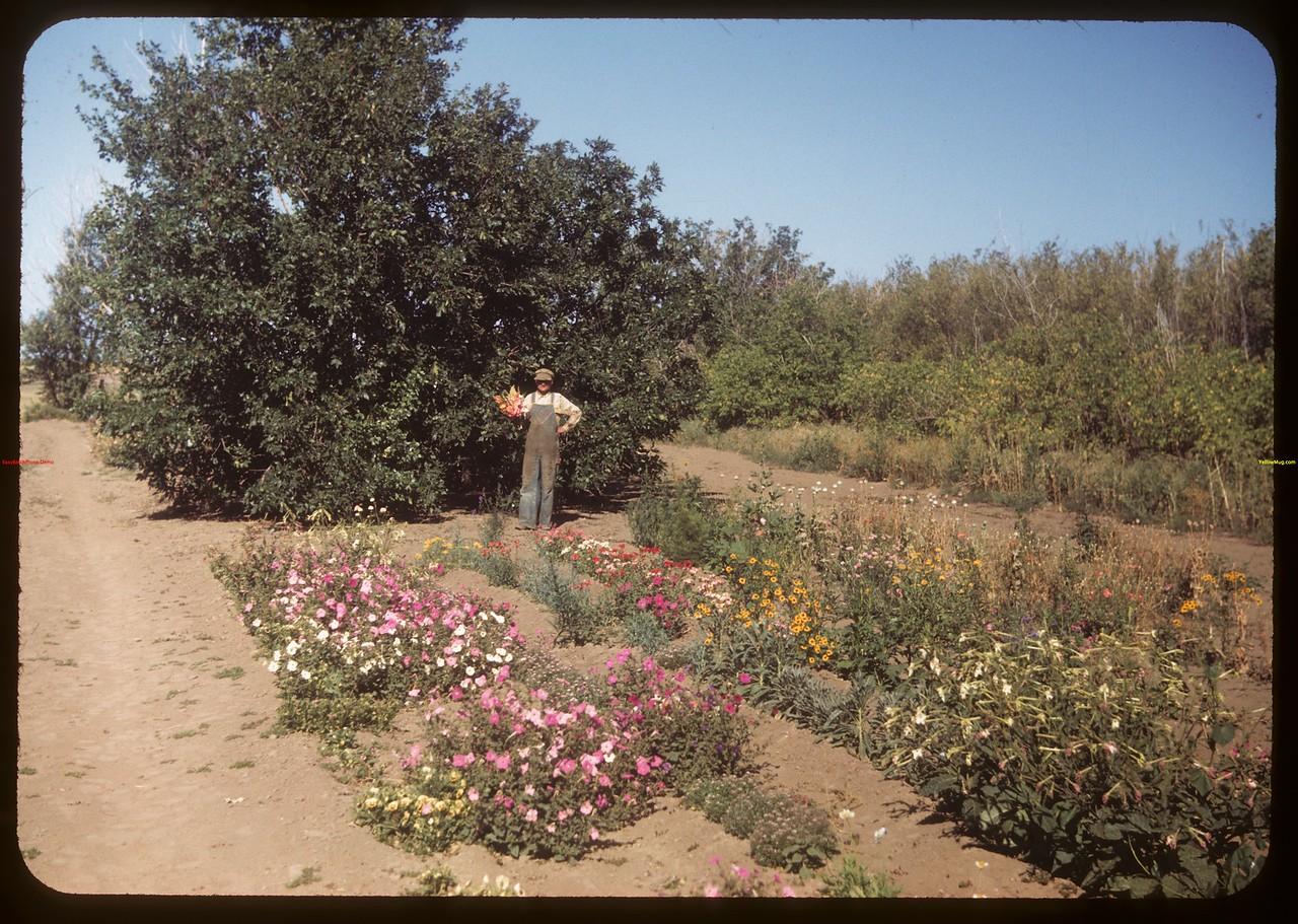 Elcid Dumont in garden..  Ponteix.  08/11/1949