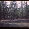Jackpine forest - south end Beaver Bridge - Meadow Lake to Goodsoil	 Goodsoil	 09/23/1944