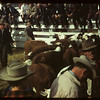 Checking them over - Calf Club day	 Consul	 05/31/1949