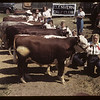 Glenvern Calf Club at show and sale. Aneroid. 06/08/1949