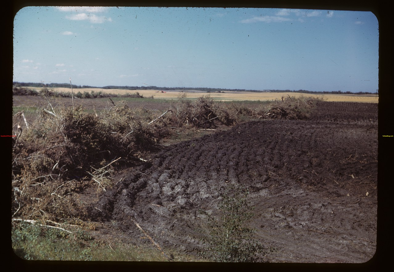 Brush piling and breaking - Springside to MacNutt	 MacNutt	 09/01/1949