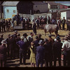 J.W. Durno of Calgary selling Bulls.  North Battleford.  05/22/1945