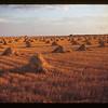 Sask. Grain Fields Lorlie 09/04/1946