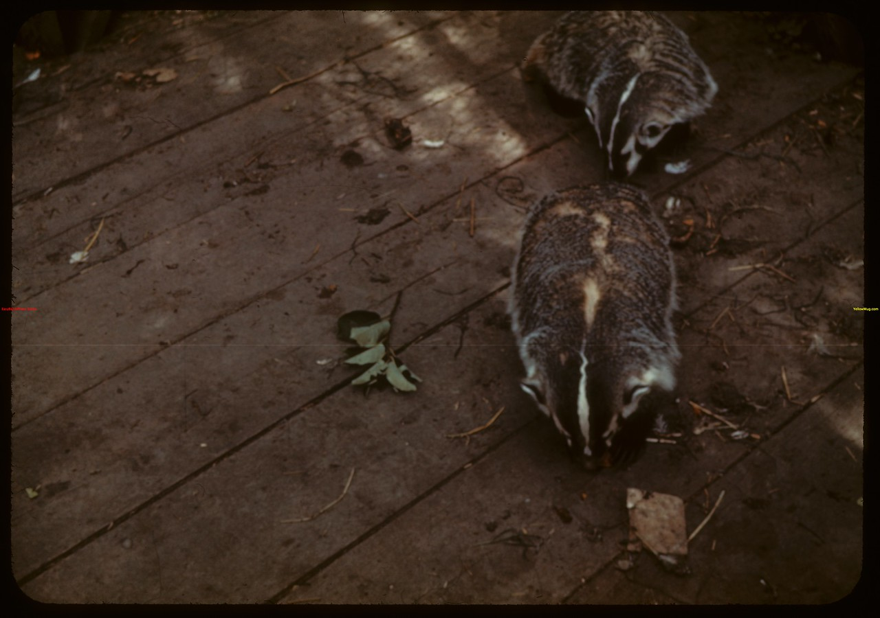 Badgers. Moose Jaw 08/20/1940