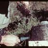 Ao - Organic top soil profile Loon River 09/23/1944