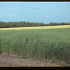 Oats - wheat - tress north of 4 corners.	 Meadow Lake	 08/21/1942