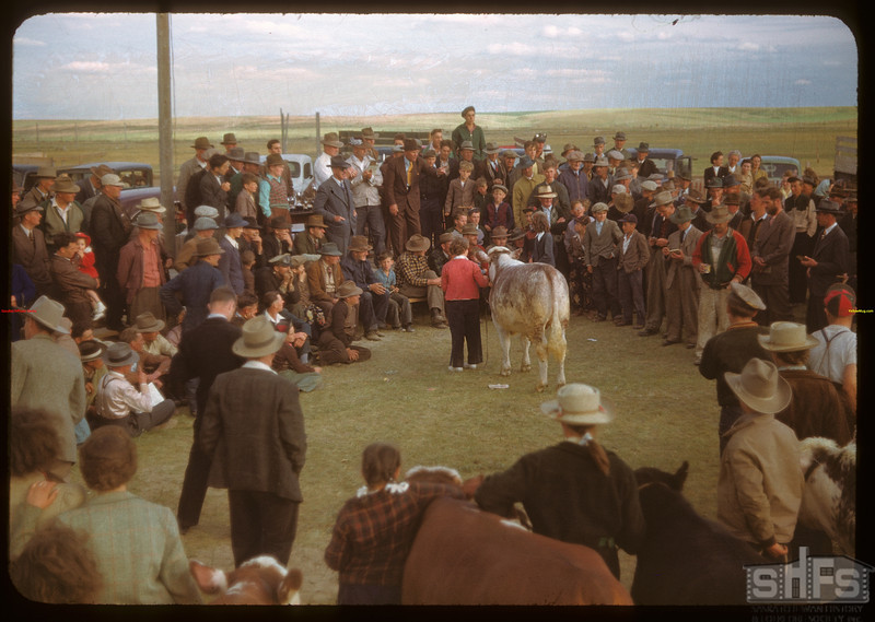 Calf Clubs sale..  Ponteix.  06/09/1948