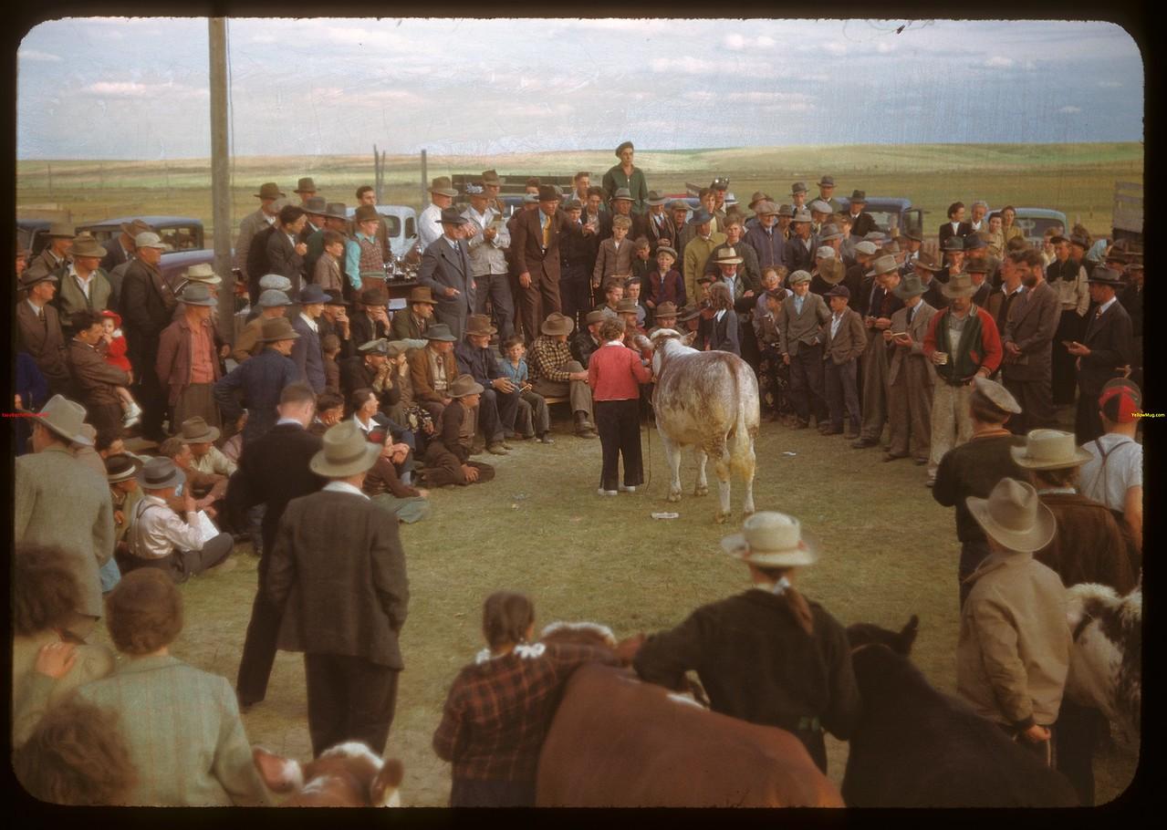 Calf Clubs sale..  Ponteix.  06/09/1948