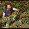 Mrs. Jack MacPhail displays Russian Buckthorn - Dominion Experimental Station	 Melfort	 09/28/1946