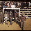Officials & Auctioneers stand - Fat Stock Show & Sale.	Eastend. 06/01/1949