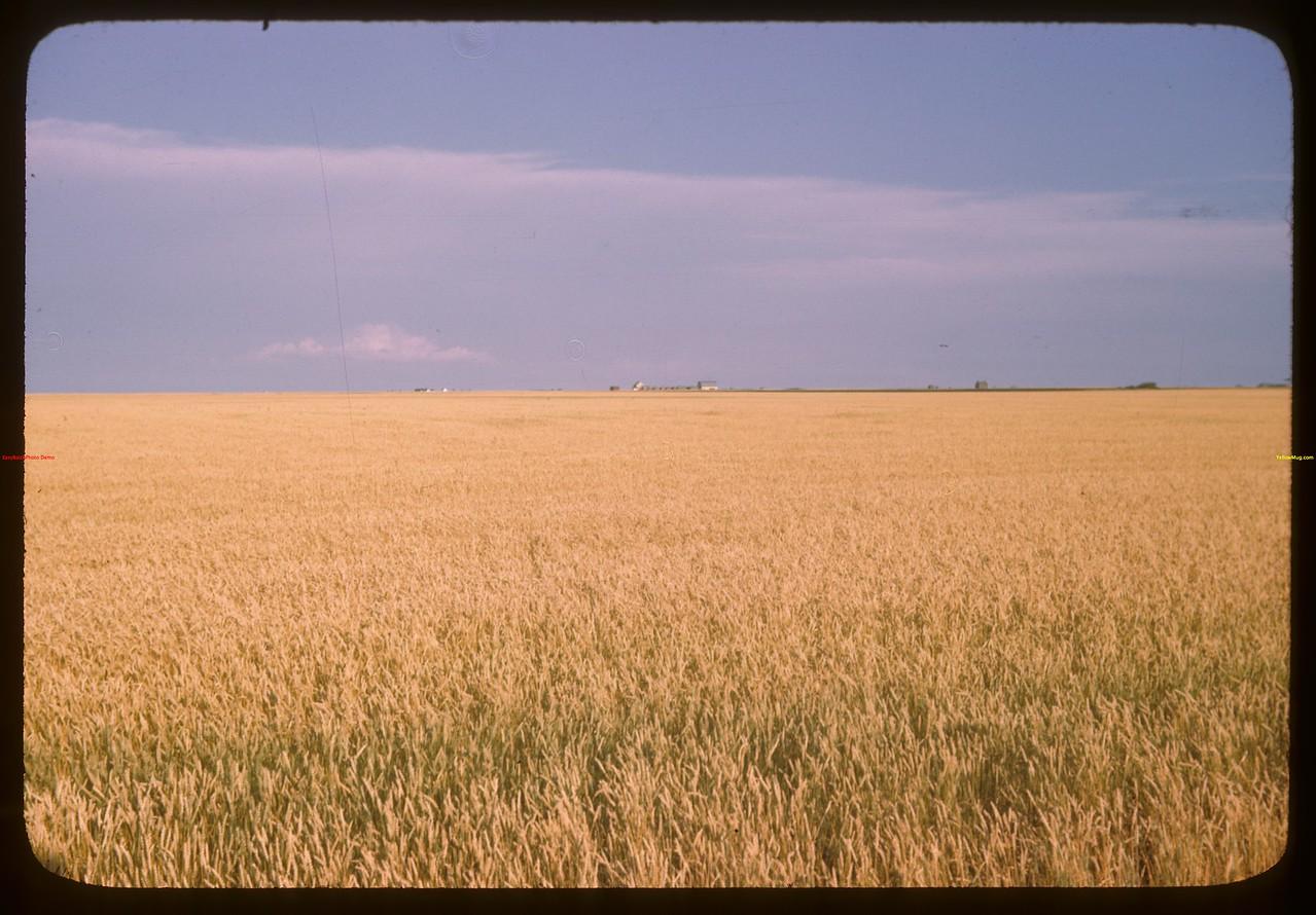 """Regina Plains """"Bread Basket of the World"""" looking south from Regina.  Regina.  08/13/1946"""