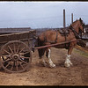 Dump cart near stock yards. Toronto. 12/06/1946
