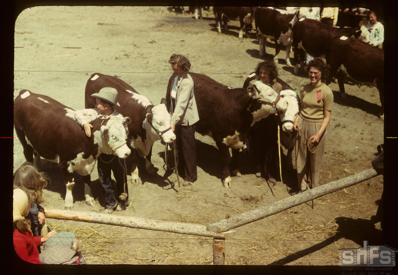 Best calves - Calf Club show & sale. Eastend. 06/01/1949