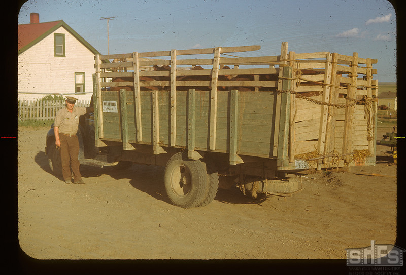 Trucking calves - after the show. Mankota 06/08/1948