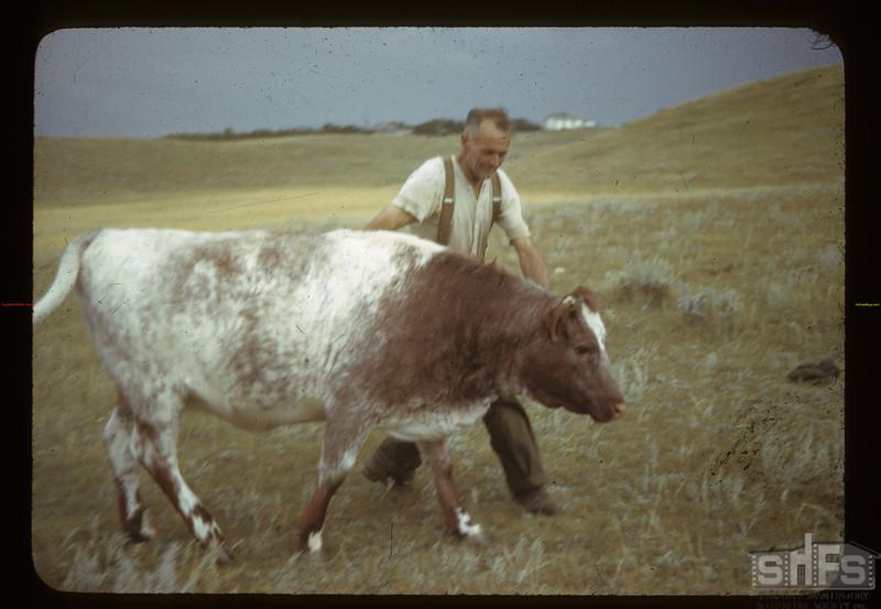 Prize Shorthorn Cadillac 08/27/1942