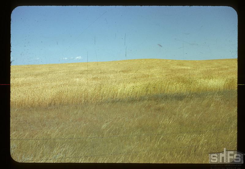Wheat field. Climax. 08/28/1942