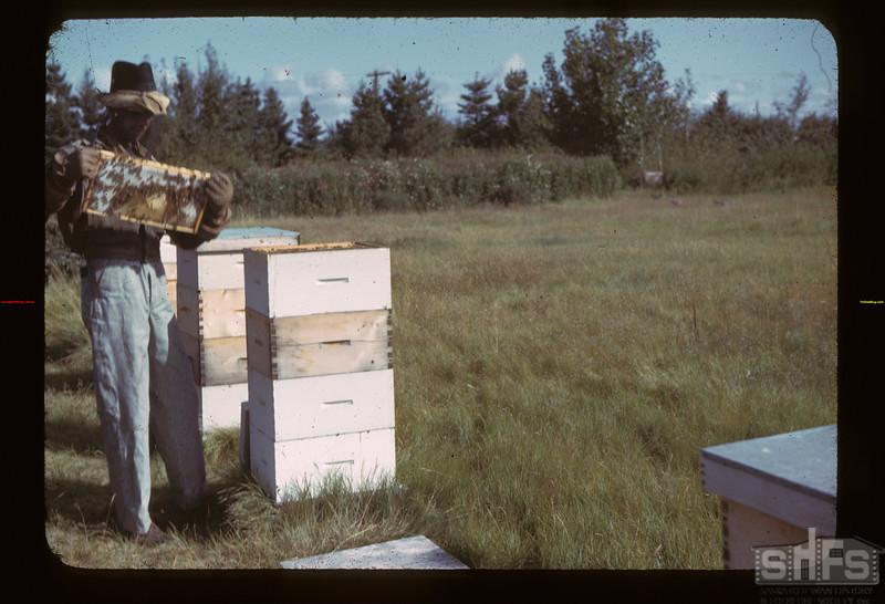 E.B. Ramsey Jr. and bees Fillmore 09/17/1942