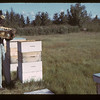 E.B. Ramsey Jr. and bees	 Fillmore	 09/17/1942