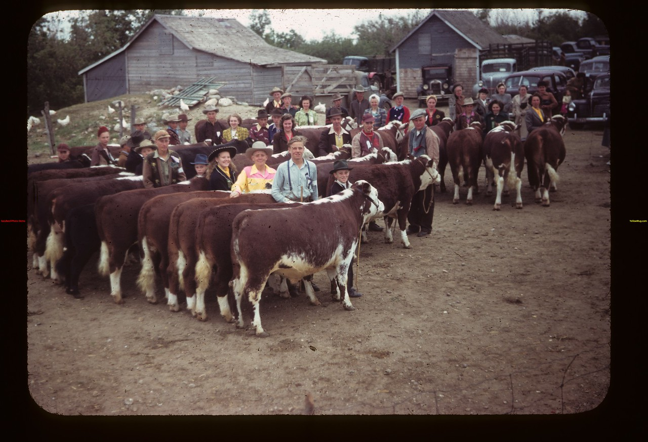 Grand Aggregate Calf Club Show at McTaggart's Ferland 06/17/1949