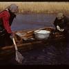 Spawning pickerel Loon Lake 04/30/1944