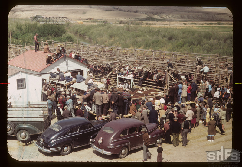 Community live stock sale. Eastend 06/01/1949