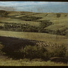 Sheep (Homeward Bound) in the Cypress Hills.  South Fork.  07/31/1948