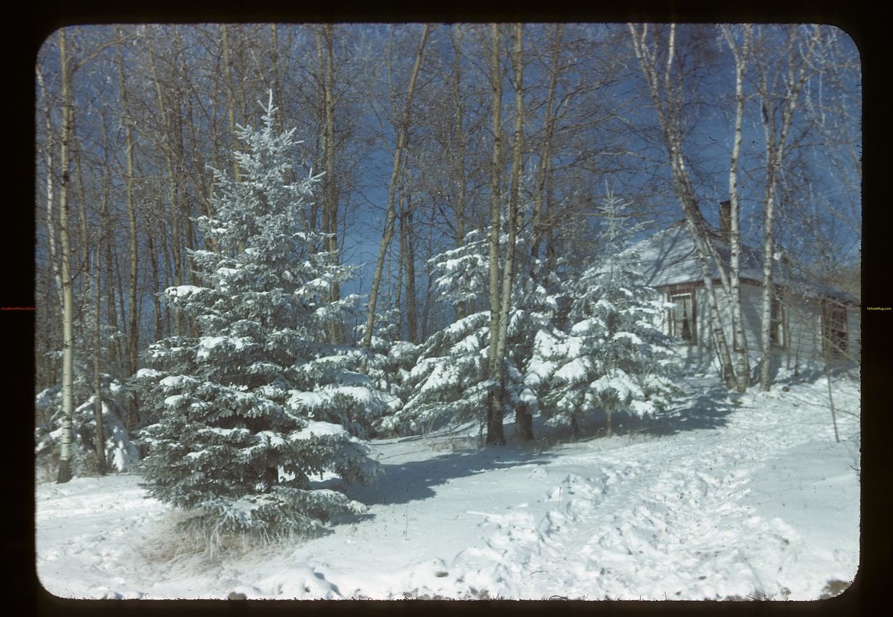 Spruce at Kenosee Lake Chalet	 Carlyle	 11/13/1945