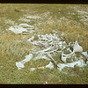 Last of old horse - Watson's ranch	 Eastend	 09/03/1948