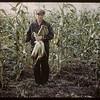 Otas Jones - 65 acres hybrid corn.  North Battleford.  09/21/1944
