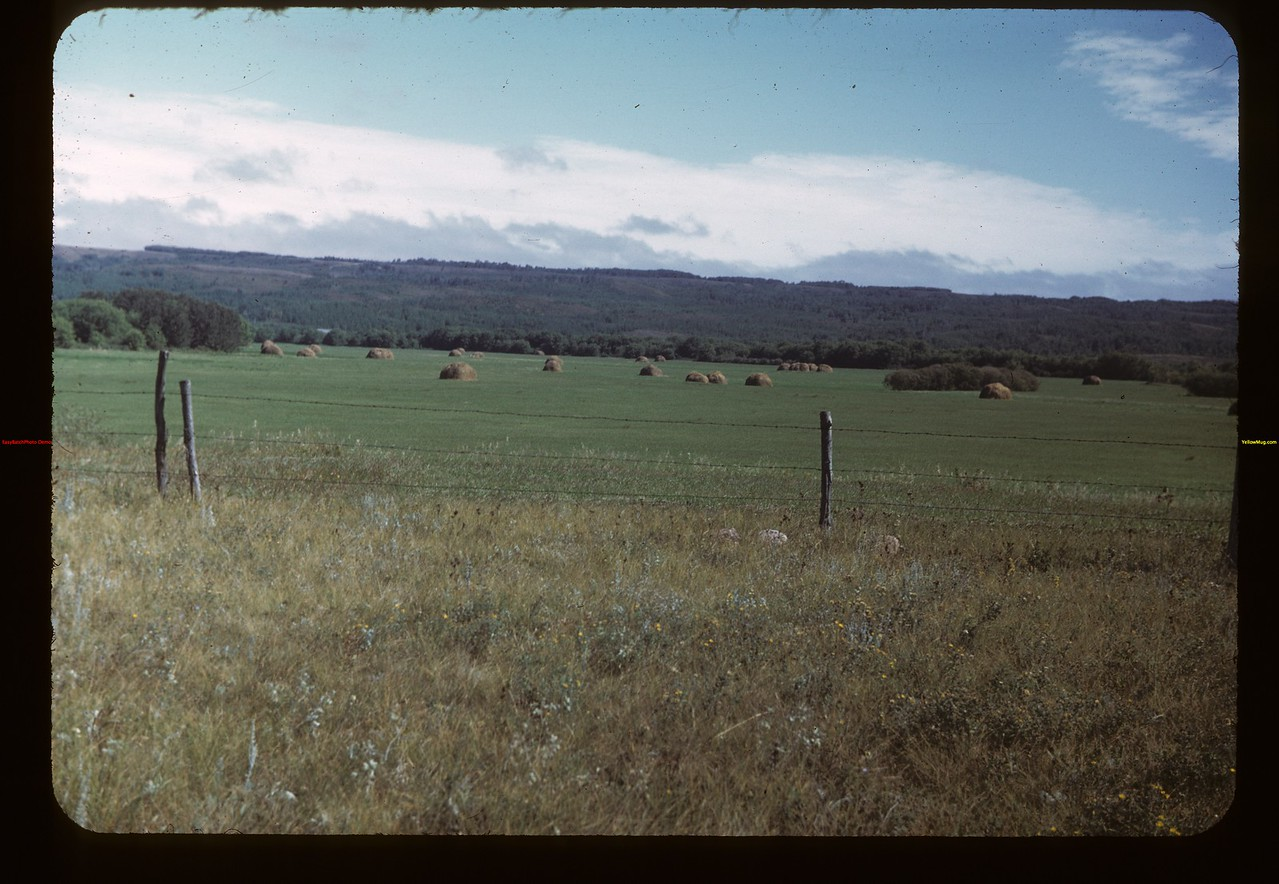 Assiniboine River - Hay Flat east of MacNutt MacNutt 09/02/1949