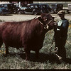 Bull show and sale - J.W. Durno auctioneer.  North Battleford.  05/25/1944