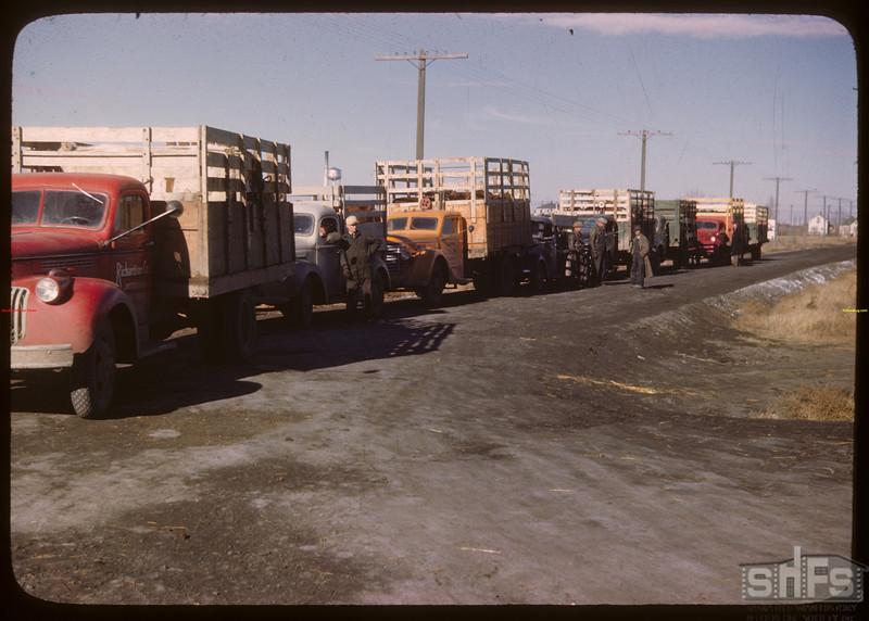 Trucks in line - north of Livestock Pool stock yards.  Regina.  10/22/1946