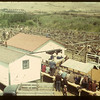 Calf Club Show & Sale. Eastend. 06/01/1949