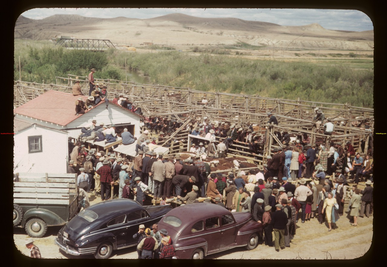 Sale is on - Fat stock show & sale. Eastend 06/01/1949