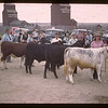 Line-up for handling Baby Beef Club.  Donna Smith - Lloyd Switzer - Nora Way & Laurence Brier.	 Mankota	 06/05/1946