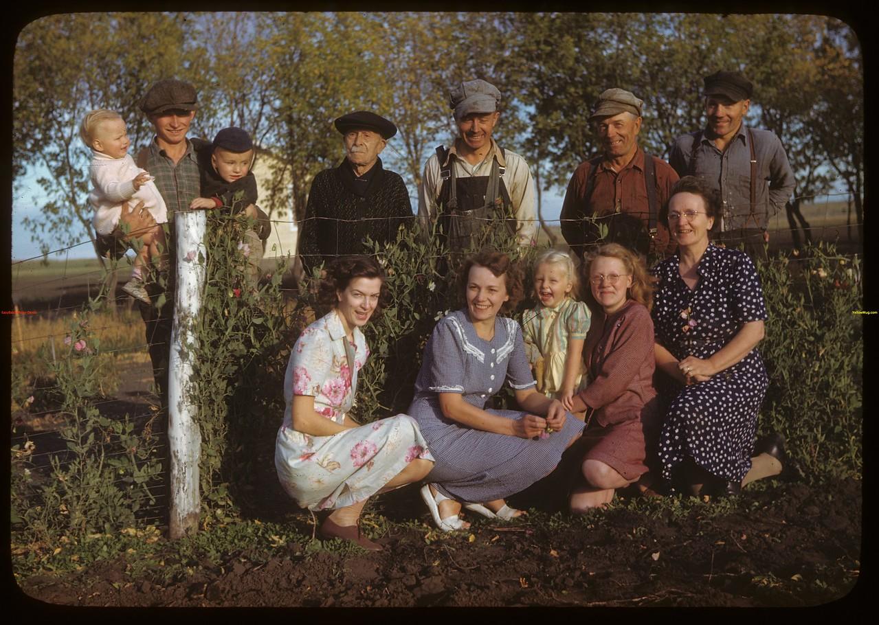 Chapman's and Dexter's Laurel co-op farm. Meskanaw 09/24/1946