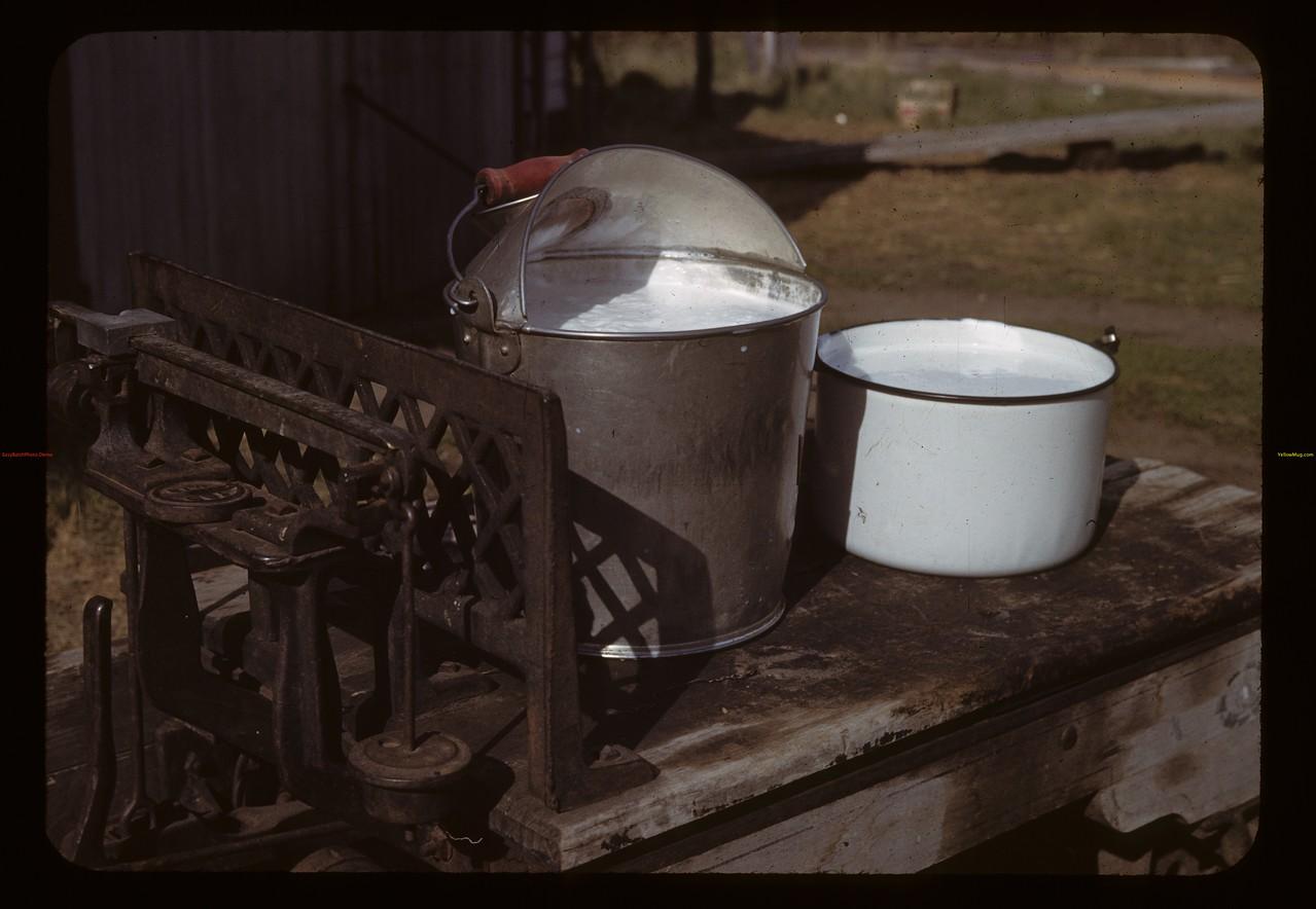 William Schaefer - prize Holstien's morning milk. Cavalier 06/05/1943